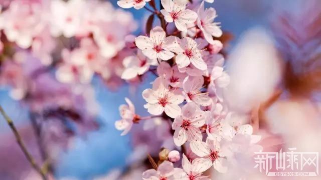 新昌桃花节,万人浪漫桃花之约,只为等君来~