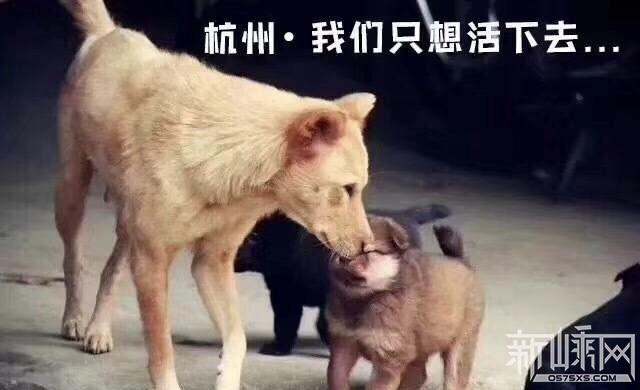 关于杭州打狗视频真相,我只想说……